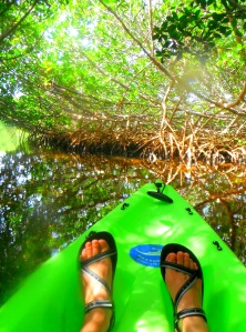 Kayaking the Mangrove Tunnel